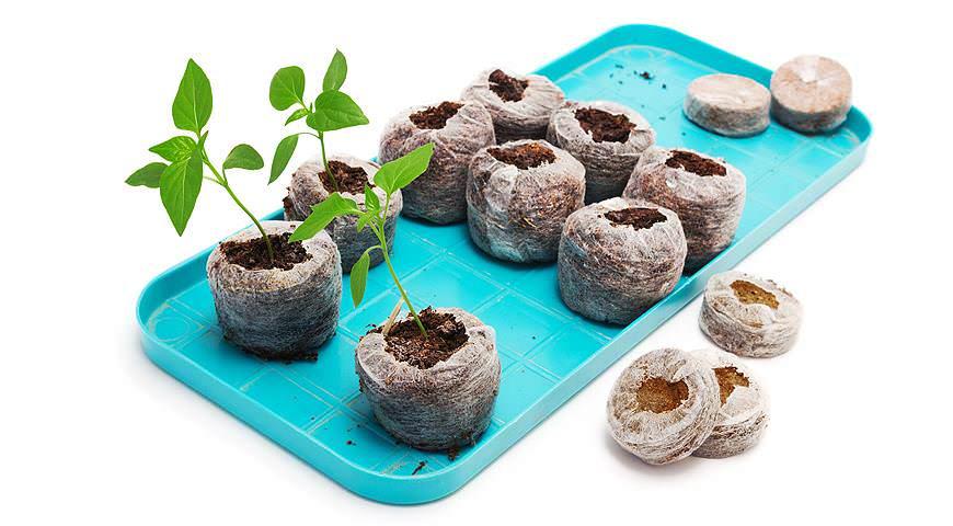 Перец очень плохо переносит пикировку, поэтому высевать его рекомендуется сразу же в специальные торфяные горшочки
