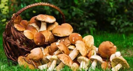 В Волгоградской области растет множество видов грибов