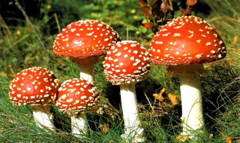 Ядовитыми считаются те виды, которые содержат в себе токсины