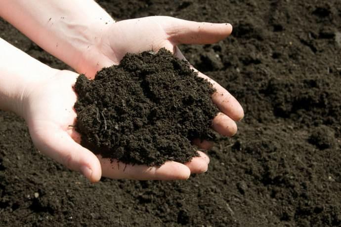 Самое главное правило - соблюдать кислотность почвы