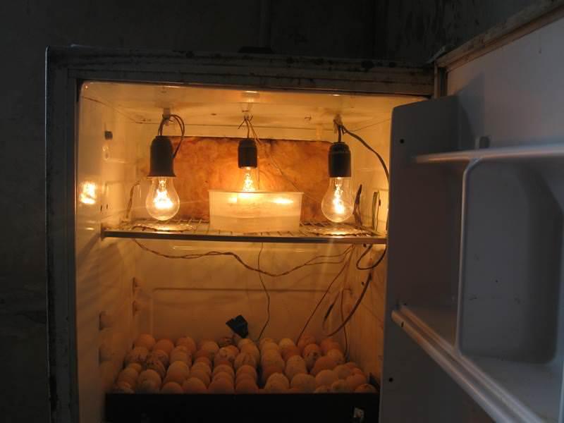 Инкубатор из холодильника своими руками сделать проще всего