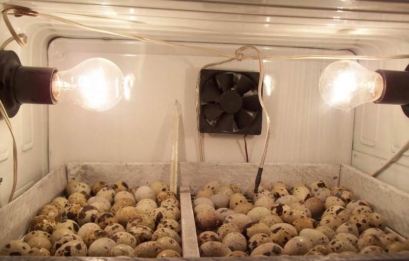 Инкубаторы, сделанные своими руками в домашних условиях, имеют многочисленные разновидности