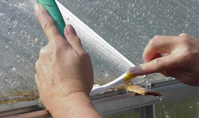 Мох и колонии плесневелых грибков с тепличного каркаса следует удалить механическим способом
