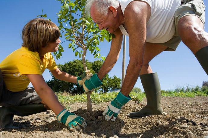 В октябре следует производить посадку молодых саженцев в саду