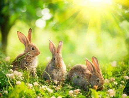 Для животных важно, чтобы корма, в том числе и гранулы для кроликов, были качественными