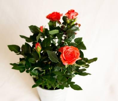 Цветы вносят в течение жизни нотку радости и красоты