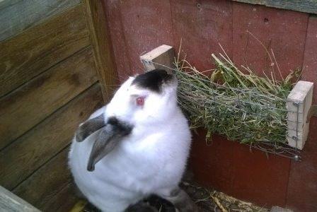 Кормушки для кроликов обычно изготавливают и устанавливают на этапе строительства клетки