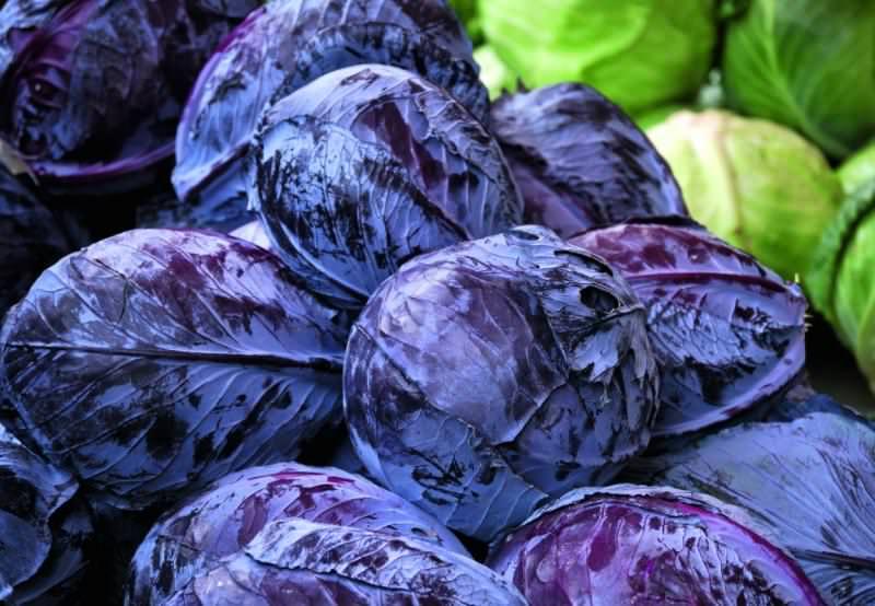 Насыщенный фиолетовый цвет ее листьям придает пигмент антоциан, который обладает выраженными антиоксидантными свойствами