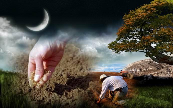 Новая Луна стимулирует разрастание корней, а для надземной части благоприятствует полная Луна