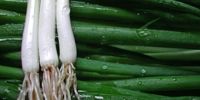 Лук-порей сохраняет свежесть в течение одной недели при условии содержания при комнатной температуре