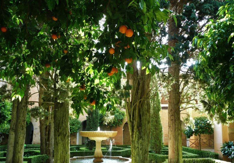 Теплолюбивое, южное мандариновое дерево можно вырастить и в условиях средней полосы России