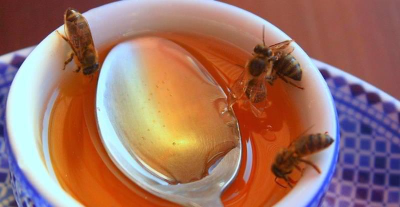 Ценный питательный продукт, которым не прочь полакомиться каждый из нас - результат огромного труда целой колонии насекомых