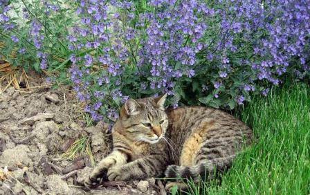 Владельцы кошек хорошо знают, что больше всего нравится их пушистым питомцам