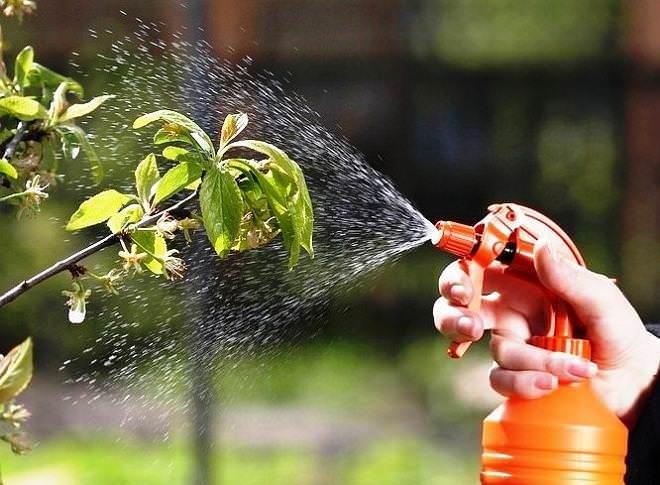 Жидкая Актара удобна в применении и позволяет предохранить сад и огород от вредителей