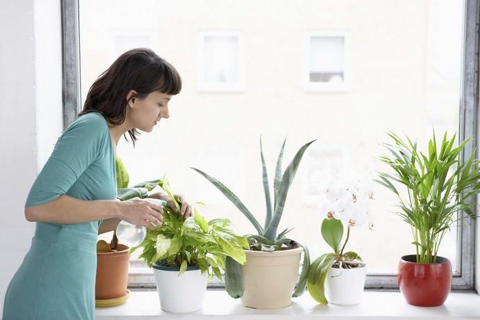 Комнатные растения можно пролить составом или опрыскать их полностью
