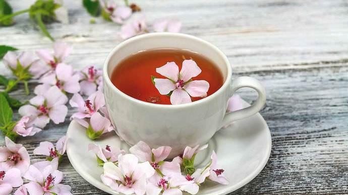 В народной медицине из алтея готовится чай