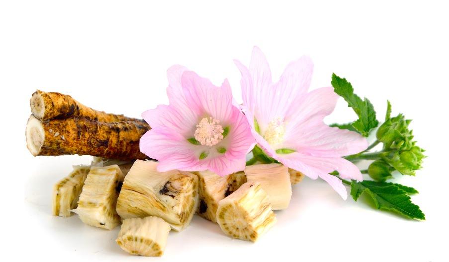 Для приготовления различных отваров и сиропов из алтея, берутся, зачастую, корни растения