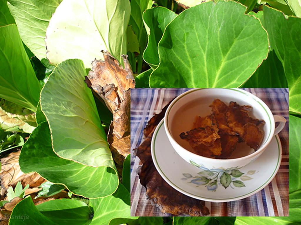 Применение монгольского чая помогает бороться с депрессиями, способствует восстановлению работоспособности, позволяет бороться с лихорадкой и диареей