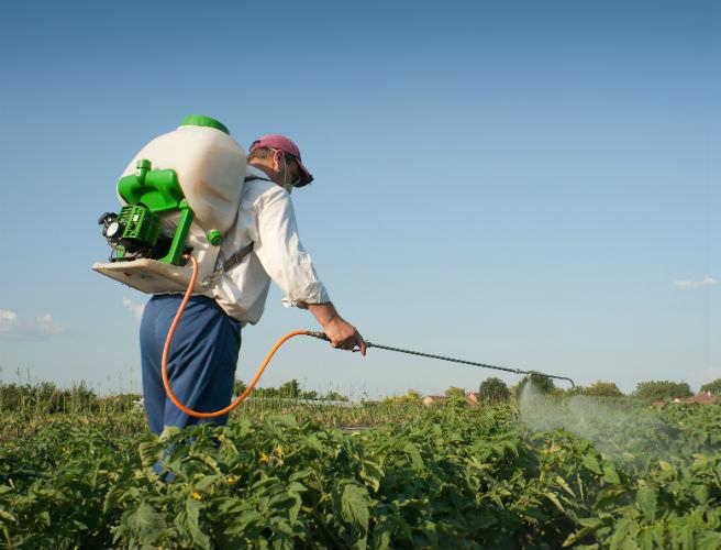 Для картофеля применяют Циркон с целью усиления его роста и урожайности