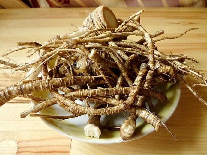 Корневую часть дудника, для заготовки в качестве пряности, следует выкапывать на стадии вызревания семян