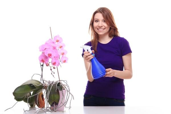 Фитоверм также годится для обработки популярных комнатных цветов — орхидей