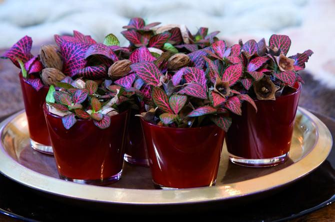 Омоложение и улучшение внешнего вида – необходимая процедура для декоративного растения