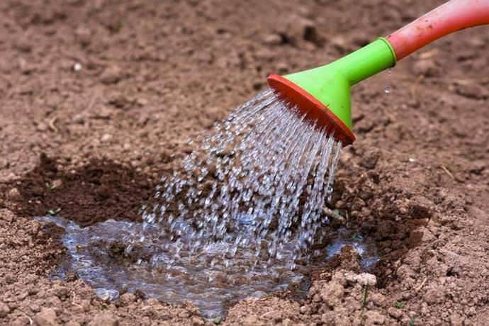 Защитить капусту от грибковой инфекции можно посредством полива почвы Фундазолом перед высадкой рассады