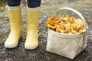 В Харьковской области лучше всего ходить за грибами осенью