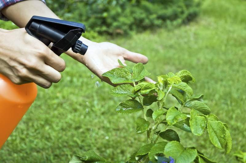 Чаще всего дачники отдают предпочтение тем инсектицидам, которыми нужно опрыскивать растения