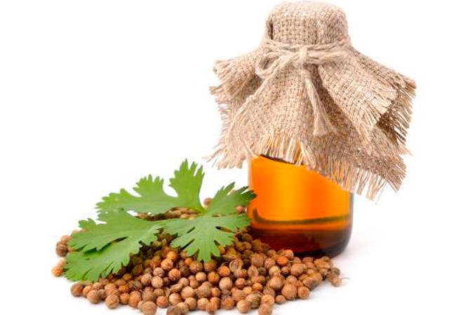 Эфирное масло кинзы полезно для организма человека и оказывает мощное противовирусное и противовоспалительное действие