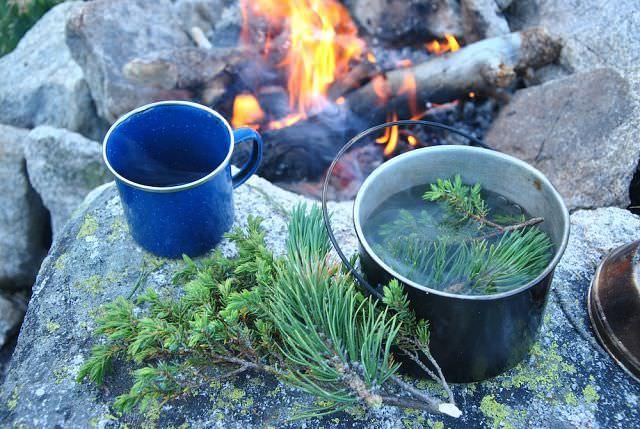 Чай из ягод можжевельника отличается характерным запахом, который объясняется присутствуем в чае эфирного масла