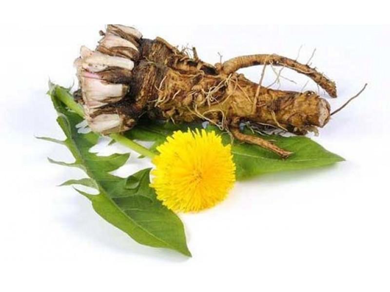 Заготавливать корень одуванчика лучше в середине или конце весны