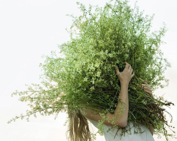Подмаренник заготавливается в период цветения