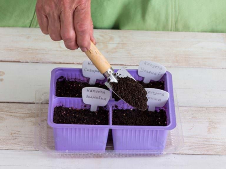 Сажать семена капусты предпочтительно на растущую Луну