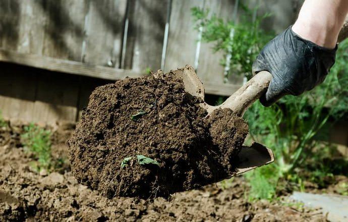 Грамотно подготовленная грядка – залог хорошего самочувствия семян и их дружного прорастания