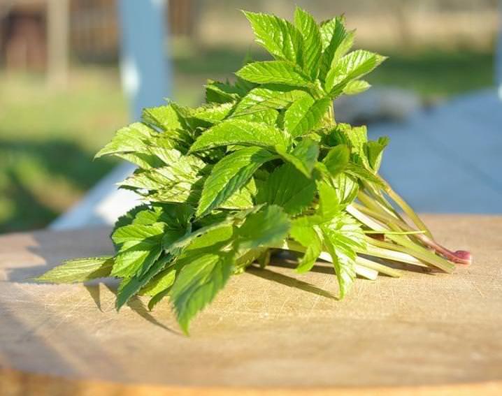 Большая часть полезных веществ находится в листьях сныти