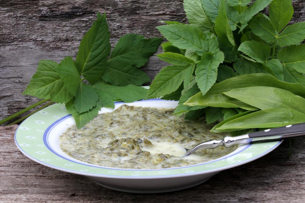 Листья травы обдают кипятком и употребляют в пищу для предотвращения цинги, авитаминоза и малокровия