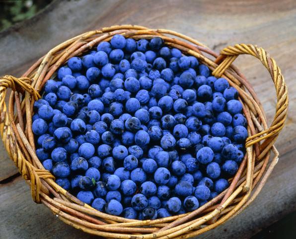Плоды терновника содержат дубильные соединения и массу полезных компонентов