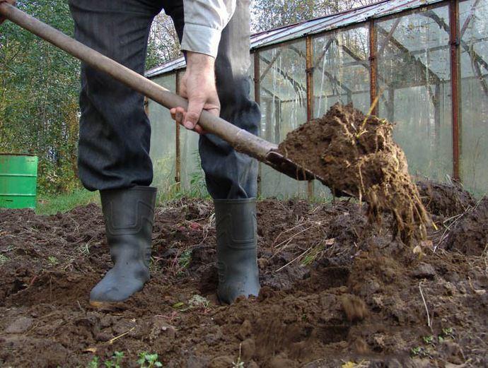 Грунт перекапывают и одновременно с этим вносят удобрения