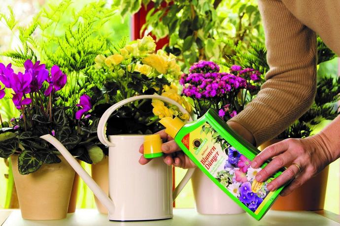 Обитателям подоконника полезны и органические вещества, и минеральные