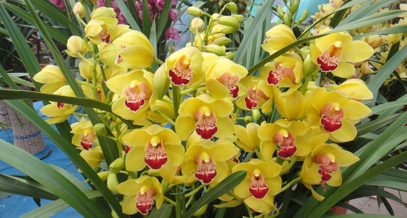 Каждая орхидея имеет свои особенности, что и позволило классифицировать данное растение