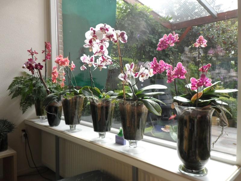 Цветы семейства Орхидные любят влагу, но в сильно увлажненной почве из-за недостатка кислорода происходит загнивание корней