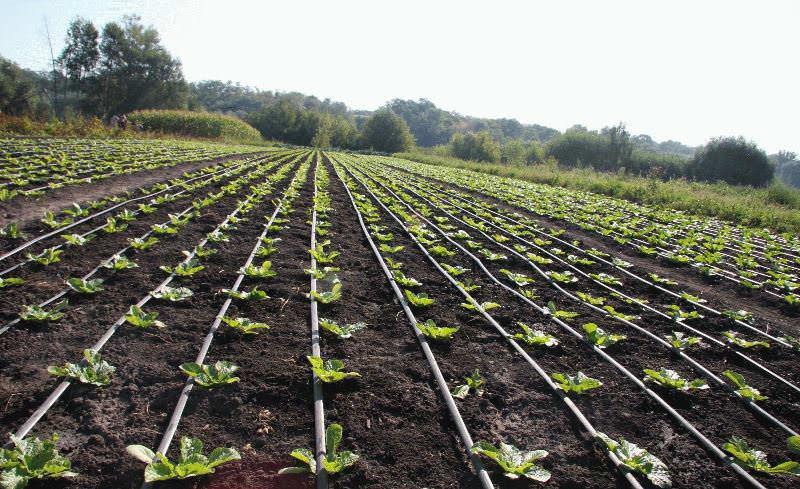 Мульча помогает бороться с сорняками, попросту препятствуя из прорастанию