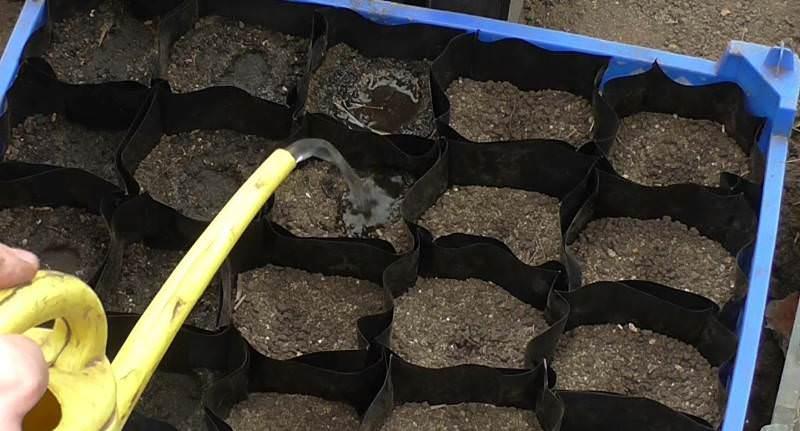 Выращивание рассады начинается с посадки семенного материала в контейнеры