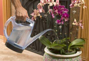 От правильного полива зависит здоровье комнатных растений