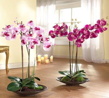 Каждый начинающий цветовод рано или поздно задает себе вопрос о том, как размножить орхидею в домашних условиях