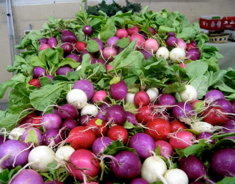 В состав редиса входят разнообразные витамины, необходимые для нормальной жизнедеятельности нашего организма