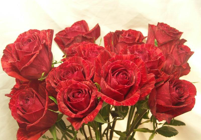 Из основных достоинств сорта Ред Интуишн дачники отмечают его выносливость и обильное цветение, а также прекрасную устойчивость к болезням