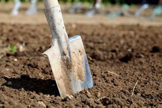 Важным процессом для получения хорошего урожая является подготовка почвы