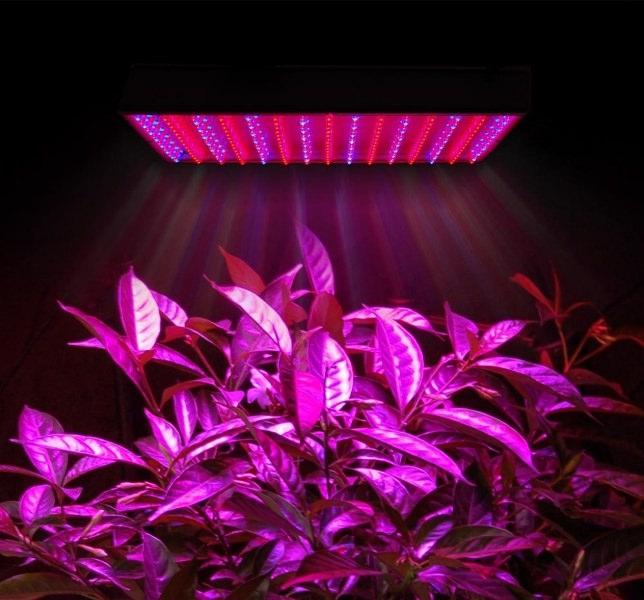Самое лучшее решение - светодиоды красных и синих цветов в соотношении 2:1